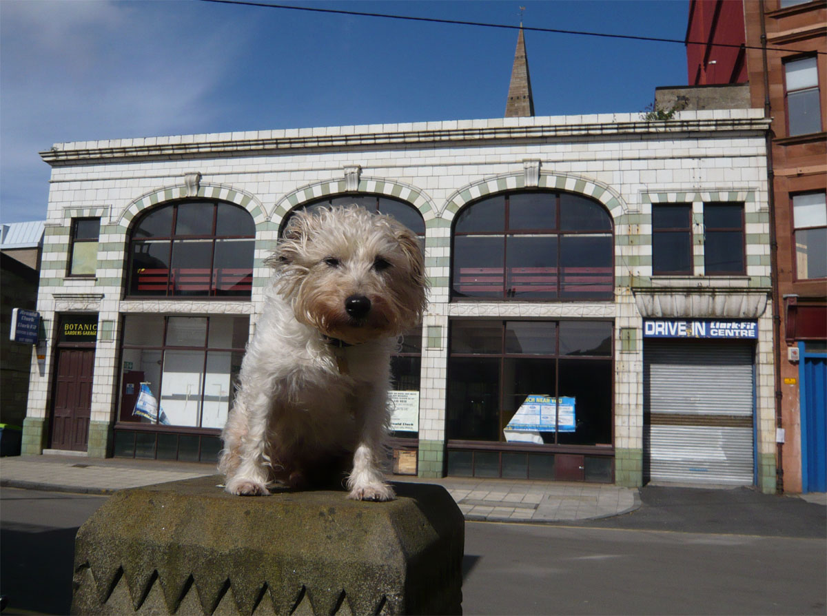 Pickles posing like Greyfriars Bobby outside the Botanics Garage