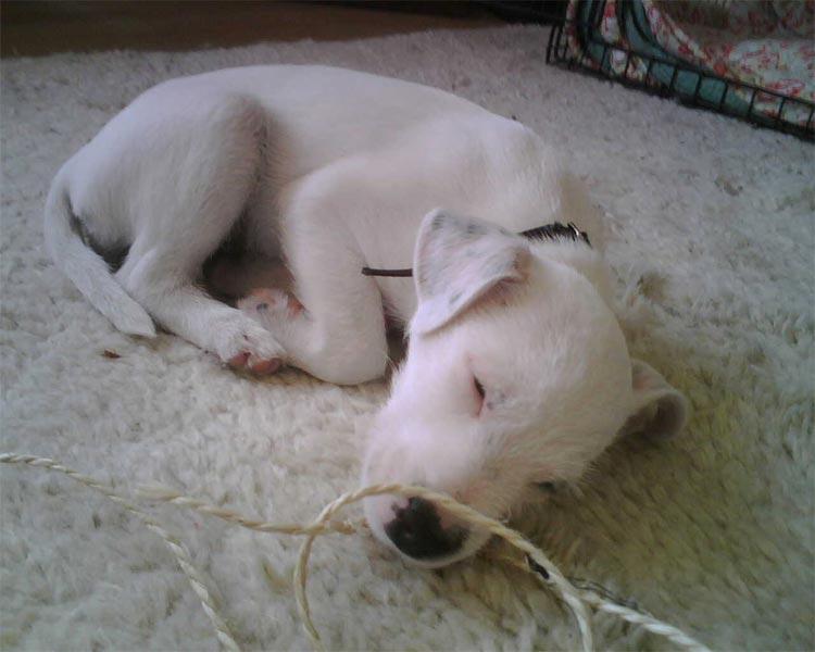 Rudi asleep